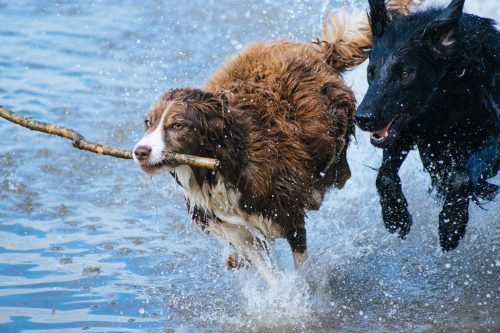 dogs-1246588_1920